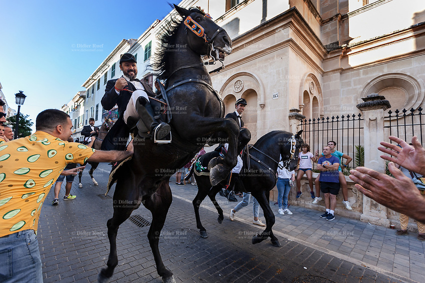 """Spain. Balearic Islands. Minorca (Menorca). Mahon. Rising horse at  """"Fiestas de la Mare de Déu de Gràcia"""" during the traditional summer festival. The Menorquín is a breed of horse indigenous to the island and is closely associated with the doma menorquina style of riding. The riders wear black and white and most of their horses (adorned with ribbons and multi-coloured rosettes) are of the highly-considered Menorcan breed. The riders and their horses parade through the streets, and these magnificent and remarkably calm horses rear up on their hind-legs to the delight of the crowd. The most valued quality of Menorquín horse is its suitability for the traditional festivals of Menorca. Horses and riders are at the centre of local fiesta celebrations, in a tradition that may go back to the 14th century and incorporate elements of Christian, pagan and Moorish ritual. Some 150 riders participate in the festival in Mahón. Riders pass through the crowds, executing caracoles and repeatedly performing the bot. The aim of the 'bot' is for the horse to stand on its hind legs while keeping its head and shoulders relaxed and without tension; the more often it is performed and the greater the distance travelled, the greater the applause of the crowd. The elevade, in which the horse beats the air with the front hooves, is also a part of the ritual of the fiesta. Touching the horses is believed to bring good luck. Maó (in Catalan) and Mahón (in Spanish), written in English as Mahon, is a municipality, the capital city of the island of Menorca, and seat of the Island Council of Menorca. The city is located on the eastern coast of the island, which is part of the autonomous community of the Balearic. In Spain, an autonomous community is a first-level political and administrative division, created in accordance with the Spanish constitution of 1978, with the aim of guaranteeing limited autonomy of the nationalities and regions that make up Spain. 7.09.2019 © 2019 Didier Ruef"""