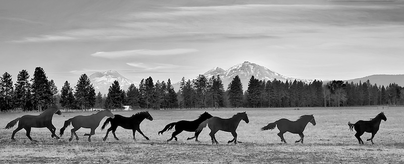 Iron horse sculpture in Sisters Oregon with Three Sisters Mountain.