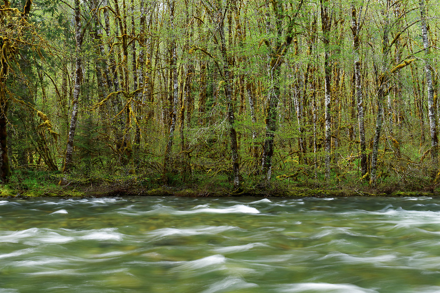 Beckler River and forest leafing out in spring, King County, Cascade Mountains, Washington, USA