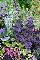 Kale Redbor in mixed flower and vegetable garden with Eryngium, amaranthus, salad greens, cabbage, Euphorbia, Papaver poppy, Ricinus 40199