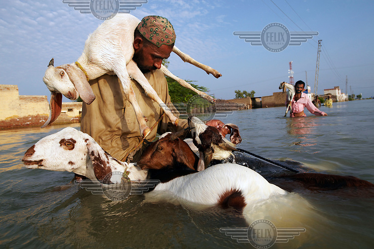 Men carry goats on their shoulders as they try to cross the floodwaters with their livestock in the village of Sultan Kot. Severe flooding had left at least 1,600 people dead and affected up to 20 million.
