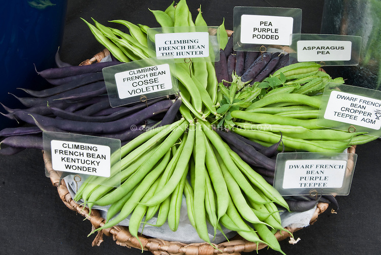 Signs labeling types of beans & peas, including Climbing French Bean Kentucky Wonder, Cosse Violette, The Hunter, Purple Podded Pea, Asparagus Pea, Dwarf French Bean Cropper Teepee & Purple Teepee, in basket