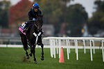 October 31, 2018 : My Gal Betty, trained by Roger L. Attfield, exercises in preparation for the Breeders' Cup Juvenile Fillies Turf at Churchill Downs on October 31, 2018 in Louisville, Kentucky. Evers/ESW/Breeders Cup
