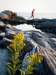 USA, Neuengland, Felsen am Pernaquid Point, 31.08.2010<br /> <br /> Engl.: USA, New England, Pernaquid Point, rocks, Atlantic, coast, sea, flowers, 31 August 2010