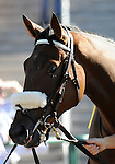 09 September 19: Mobil Unit prior to the grade 3 Summer Stakes for two year olds at Woodbine Racetrack in Rexdale, Ontario.
