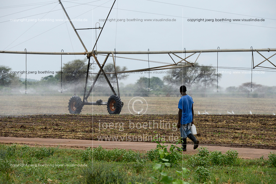 ZAMBIA, Sinazongwe Distrikt, Zambeef large farm, maize farming with Pivot irrigation, was a former cotton farm of Jimmy Carter