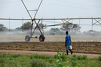 ZAMBIA, Sinazongwe Distrikt, Zambeef large farm, maize farming with Pivot irrigation, was a former cotton farm of Jimmy Carter