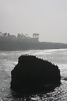 eabirds sit on top of the rock near the intersection of Sunset Cliffs Blvd and Froude Street where a peace sign stood for about eighteen months until it dissppeared mysteriously over the weekend on January 5 & 6, 2008.
