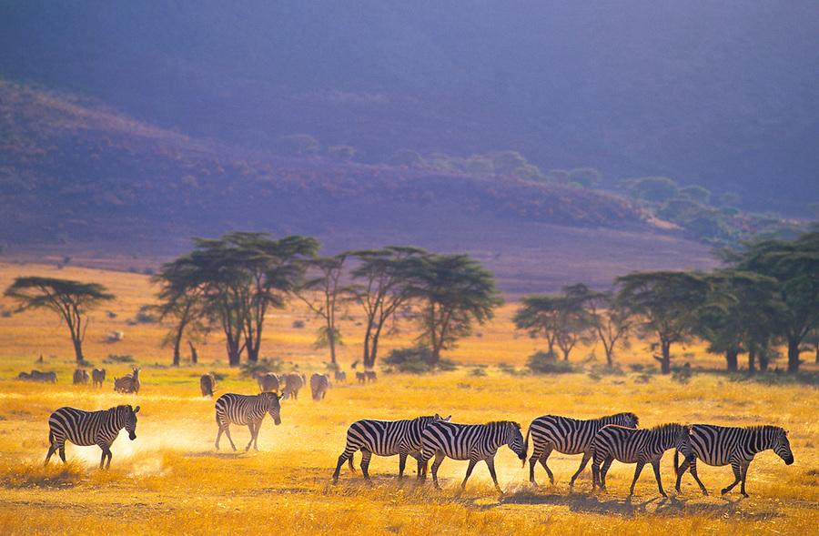 Ngorongoro, Tanzania, 2006.