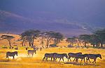 Tanzania (Film, 2006)