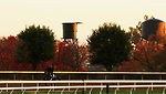 Keepmeinmind, trained by trainer Robertino Diodoro, exercises in preparation for the Breeders' Cup Juvenile at Keeneland Racetrack in Lexington, Kentucky on October 31, 2020.