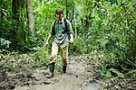 African Golden Cat (Caracal aurata aurata) researcher, David Mills, walking through swamp, Kibale National Park, western Uganda