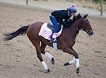 APRIL 30, 2015: Puca, trained by Bill Mott, exercises in preparation for the 141st Kentucky Oaks during morning workouts at Churchill Downs in Louisville, Kentucky. Ting Shen/ESW/Cal Sport Media