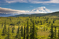 Mt. Denali, North America's Tallest Mountain Visible Along The Tundra Of Denali National Park, Interior, Alaska.