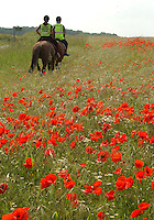 A field full of poppies in South Yorksshire providing a fitting display to coincide with the D-Day commemorations.
