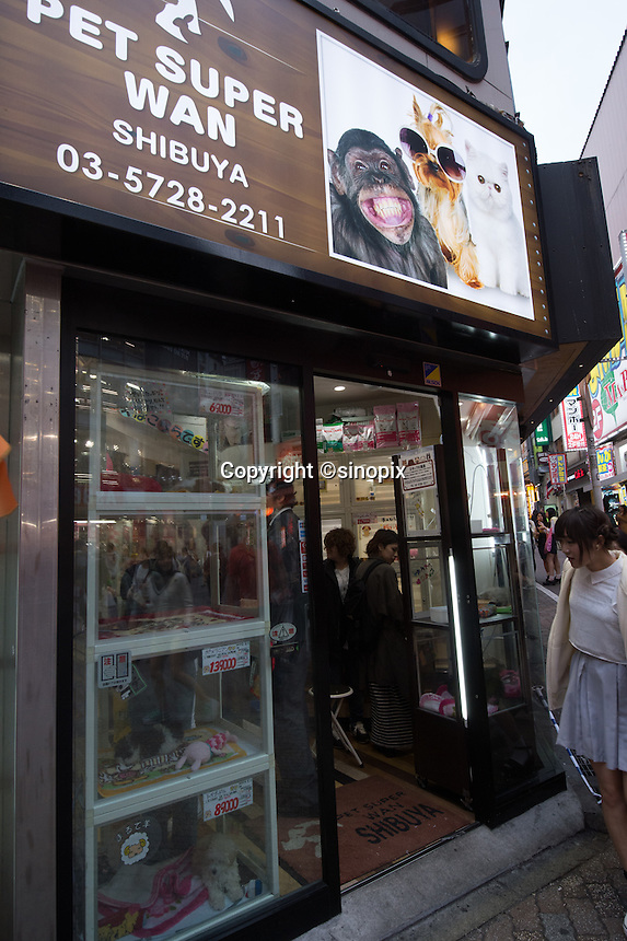 Young girl is looking at puppy from outside of the Pet shop in Shibuya, Tokyo