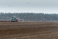 2-3-2021 Ploughing over Winter stubble ready for drilling sugar beet in Lincolnshire <br />  ©Tim Scrivener Photographer 07850 303986<br />      ....Covering Agriculture In The UK....
