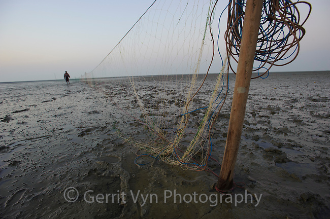 Fishing net strung across mudflats to catch birds at night. These opportunistic hunters were on a small island adjacent to Nan Thar. They were not regular hunters but were fishermen who occasionally hunt birds when fishing is poor. They captured several migratory shorebirds including Common Redshank, Terek Sandpiper, Eurasian Curlew, and godwits. Rakhine State, Myanmar. January.
