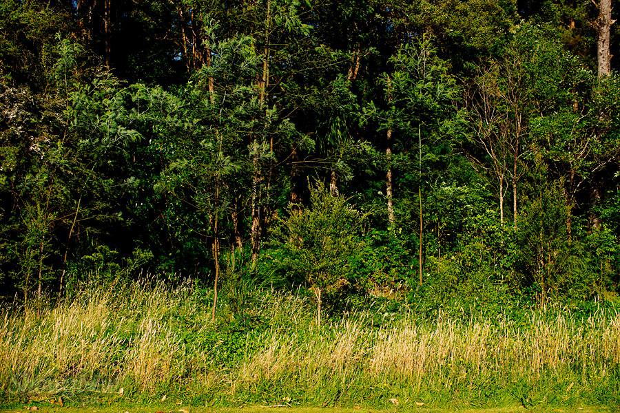 Image Ref: YV200<br /> Location: Toolangi Recreation Reserve<br /> Date: 03 Jan 2015