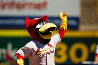 "Springfield Cardinals Mascot ""Louie"" pumps up the crowd prior to a game against the Tulsa Drillers at Hammons Field on September 9, 2012 in Springfield, Missouri. (David Welker/Four Seam Images)"