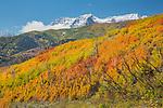 Fall Utah
