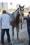 Sacristy after winning the Old Hat Stakes(G3) at Gulfstream Park. Hallandale Beach, Florida. 01-01-2012