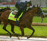 APRIL 28, 2014: Hoppertunity, trained by Bob Baffert, exercises in preparation for the Kentucky Derby at Churchill Downs in Louisville, KY. Jon Durr/ESW/CSM