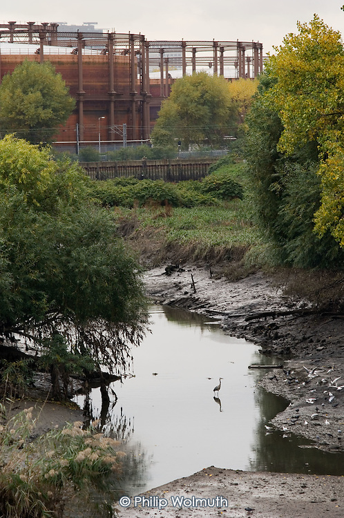 A heron stands in the tidal Channelsea River in the Lower Lea Valley, site of the 2012 Olympic Games.