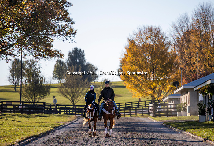 November 4, 2020: Point Of Honor, trained by trainer George Weaver, exercises in preparation for the Breeders' Cup Distaff at Keeneland Racetrack in Lexington, Kentucky on November 4, 2020. Alex Evers/Eclipse Sportswire/Breeders Cup