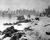 Sprawled bodies on beach of Tarawa, testifying to ferocity of the struggle for this stretch of sand.  November 1943.  (Navy)<br /> Exact Date Shot Unknown<br /> NARA FILE #:  080-G-57405<br /> WAR & CONFLICT BOOK #:  1342