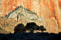 Silhouetted trees and Temple and Towers of the Virgin. Zion National Park, Utah