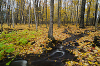 An autumn scene of freshly fallen leaves coating the Upper Peninsula forest with a stream winding through. Marquette