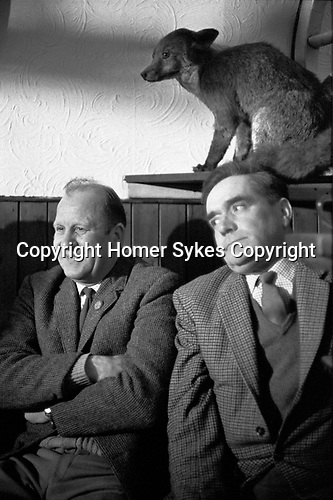 Taxidermied fox as pub decoration 1960s UK. Village pub two men chatting at the Gate Inn. Ratcliffe Culey Leicestershire England 1968 UK