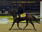 October 30, 2018 : Discreet Lover at Churchill Downs on October 30, 2018  in Louisville, Kentucky in preparation for the Breeders' Cup Classic. Mary M. Meek/ESW/CSM