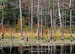 Rosecrans Bog State Forest Natural Area, Bald Eagle State Forest, Pennsylvania