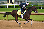 LOUISVILLE, KY - MAY 04: Shagaf, trained by Chad Brown and owned by Shadwell Stable, exercises and prepares during morning workouts for the Kentucky Derby and Kentucky Oaks at Churchill Downs on May 4, 2016 in Louisville, Kentucky.(Photo by Samantha Bussanch/Eclipse Sportswire/Getty Images)