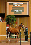 September 14, 2015: Hip 101 More Than Ready - Baffled colt consigned by Taylor Made Sales.  Candice Chavez/ESW/CSM