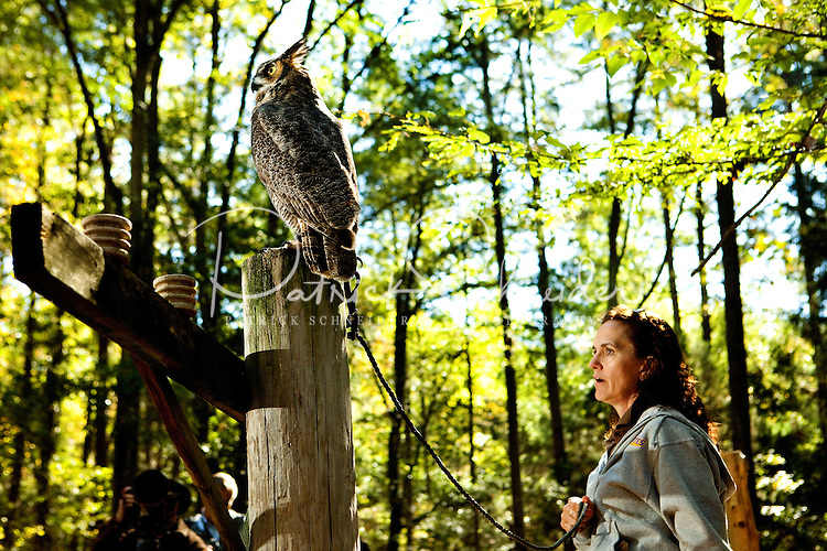 This Great Horned Owl is one of many injured and orphaned raptors living at the Carolina Raptor Center in Huntersville, NC (Mecklenburg County). Through its mission of environmental stewardship and conservation, the Carolina Raptor Center helps birds of prey through rehabilitation, research and public education. The center is located at 6000 Sample Road, Huntersville, NC.
