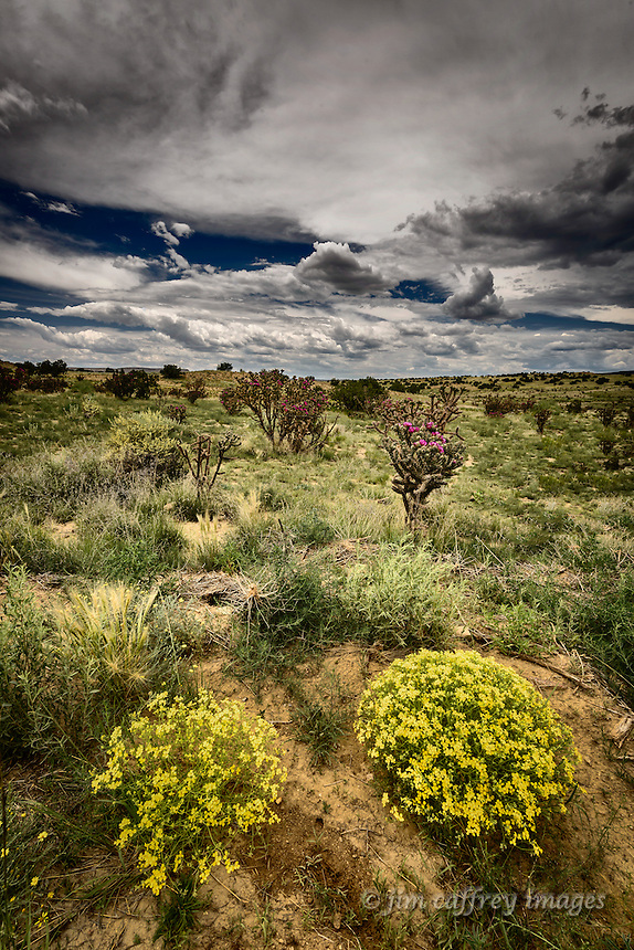 Western Wallflowers and Chainfruit Chollas bloom in the Rio Puerco Valley in New Mexico's San Juan Basin