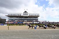 10th November 2020; Christchurch, New Zealand;  Self Assured (11) and Driver Mark Purdon win the NZ Trotting Cup at Addington Raceway, Christchurch, New Zealand