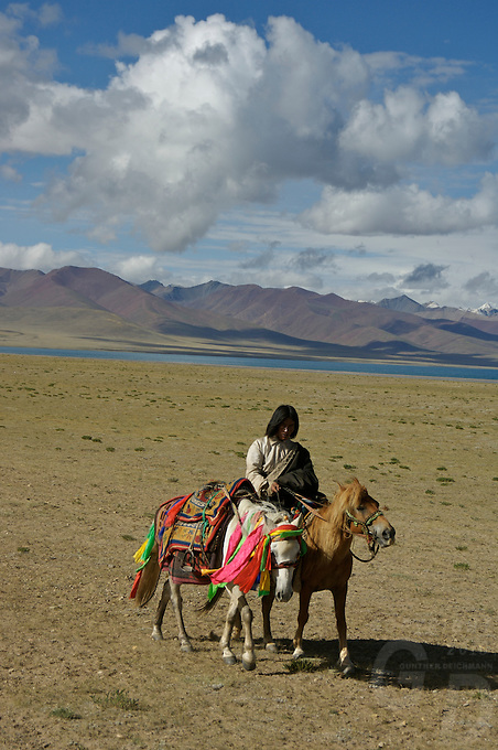 """Early morning Nomads on horseback at the edge of Namtso Lake.Namtso Lake  another holy lake in Tibet, is located near Damxung. 4718 meters (15475 feet) above sea level and covering 1900 square kilometers (735 square miles), the lake is the highest saltwater lake in the world and the second largest saltwater lake in China. The snow capped Mt. Nyainqentanglha, considered as the son of Namtso and leader of sacred mountains, soars up to sky beside her. Singing streams converge into the clean sapphire blue lake, which looks like a huge mirror framed and dotted with flowers..The Namtso Lake is held as """"the heavenly lake"""" or """"the holy lake"""" in northern Tibet. .Respected as one of the three holiest lakes in Tibet, the Namtso Lake is the seat of Paramasukha Chakrasamvara for Buddhist pilgrims. In the fifth and sixth month of the Tibetan calendar each year, many Buddhists come to the lake pay homage and pray. Deep tracks are worn into the lakeshore due to this activity. In history, monasteries stood like trees in a forest around the site, attracting large numbers of pilgrims as eminent monks in Buddhist temples extended Buddhist teachings...Buddhists believe Buddhas, Bodhisattvas and Vajras will assemble to hold religious meeting at Namtso in the year of sheep on Tibetan calendar. It is said that walking around the lake at the right moment is 100,000 times more efficacious than that in normal years. That's why thousands of pilgrims from every corner of the world come to pray at the site, with the activity reaching a climax on Tibetan April 15...Walking around the lake takes a week. Ritual walkers love to burn aromatic plants to raise smoke on Auspicious Island [explain this a little] and throw a piece of hada scarf into the lake as a token of fulfilled wishes. If the scarf sinks, it implies ones wish is accepted by the Buddha; if the scarf flows on the water or only half sinks, it means one has failed to be honest and something unhappy may lie ahead...On the four side"""