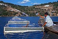 Tanques de criaçao de peixe tilapia as margens do Rio Sao Francisco. Paulo Afonso. Bahia. 2008. Foto de Marcia Minillo.