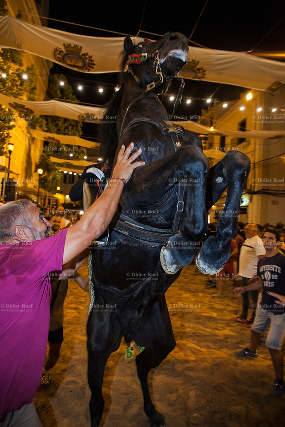 """Spain. Balearic Islands. Minorca (Menorca). Mahon. Nighttime. Rising horse at  """"Fiestas de la Mare de Déu de Gràcia"""" during the traditional summer festival. The Menorquín is a breed of horse indigenous to the island and is closely associated with the doma menorquina style of riding. The riders wear black and white and most of their horses (adorned with ribbons and multi-coloured rosettes) are of the highly-considered Menorcan breed. The riders and their horses parade through the streets, and these magnificent and remarkably calm horses rear up on their hind-legs to the delight of the crowd. The most valued quality of Menorquín horse is its suitability for the traditional festivals of Menorca. Horses and riders are at the centre of local fiesta celebrations, in a tradition that may go back to the 14th century and incorporate elements of Christian, pagan and Moorish ritual. Some 150 riders participate in the festival in Mahón. Riders pass through the crowds, executing caracoles and repeatedly performing the bot. The aim of the 'bot' is for the horse to stand on its hind legs while keeping its head and shoulders relaxed and without tension; the more often it is performed and the greater the distance travelled, the greater the applause of the crowd. The elevade, in which the horse beats the air with the front hooves, is also a part of the ritual of the fiesta. Touching the horses is believed to bring good luck. Maó (in Catalan) and Mahón (in Spanish), written in English as Mahon, is a municipality, the capital city of the island of Menorca, and seat of the Island Council of Menorca. The city is located on the eastern coast of the island, which is part of the autonomous community of the Balearic. In Spain, an autonomous community is a first-level political and administrative division, created in accordance with the Spanish constitution of 1978, with the aim of guaranteeing limited autonomy of the nationalities and regions that make up Spain. 7.09.2019 © 2019 Didier Ruef"""