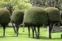 BOGOTÁ-COLOMBIA- Árboles de pino tallados./ Pine trees carved. Photo: VizzorImage/STR