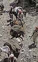 Iraq 1963 .A convoy of mules and horses with peshmergas.Irak 1963.Convoi de mules et chevaux avec des peshmergas