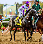 ELMONT, NEW YORK - OCT 7: Pavel in the post parade of the Jockey Club Gold Cup, at Belmont Park on October 6, 2017 in Elmont, New York. ( Photo by Eclipse Sportswire/Getty Images)