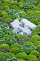 """Clipped mounds of Baby gunnera (Gunnera magellanica) and Mind-your-own-business (Soleirolia soleirolii syn. Helxine soleirolii) interplanted with Forget-Me-Nots (Myosotis sylvatica). The Sentebale Forget-Me-Not Garden,  designed by Jinny Blom, Silver Gilt medal winner, RHS Chelsea Flower Show 2013. Inspired by Prince Harry's charity Sentebale, which means """"Forget Me Not"""" in Sesotho, the language spoken in Lesotho."""