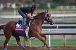 OCT 26 2014:Parranda, trained by Jerry Hollendorfer, exercises in preparation for the Breeders' Cup Filly & Mare Turf or Distaff at Santa Anita Race Course in Arcadia, California on October 26, 2014. Kazushi Ishida/ESW/CSM