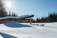 Jason Campeau runs on a slough after leaving Galena in the morning on Friday March 13, 2015 during Iditarod 2015.  <br /> <br /> (C) Jeff Schultz/SchultzPhoto.com - ALL RIGHTS RESERVED<br />  DUPLICATION  PROHIBITED  WITHOUT  PERMISSION