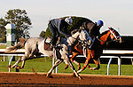 October 16, 2015:  Race Day (outside) and Curalina (inside) work in preparation for the Breeder's Cup.   Candice Chavez/ESW/CSM
